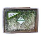 Grow Organic Kale Microgreens 50G - in Sri Lanka