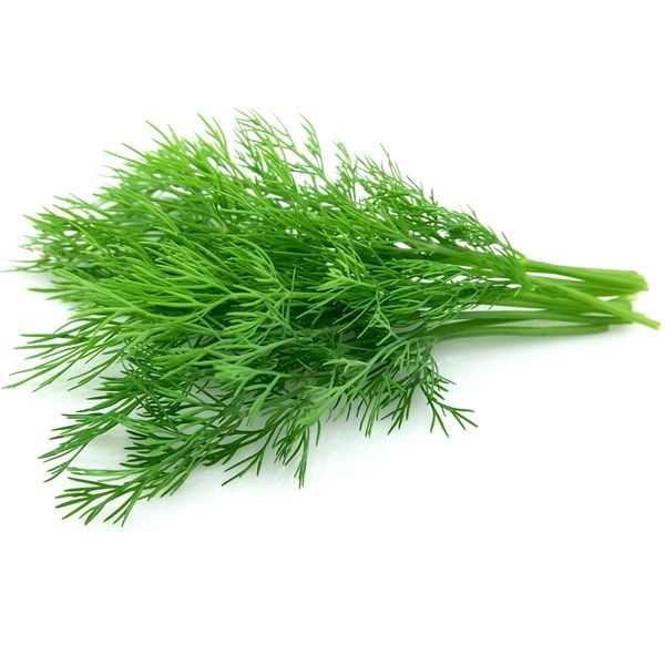 Fresh Dill Leaves - in Sri Lanka