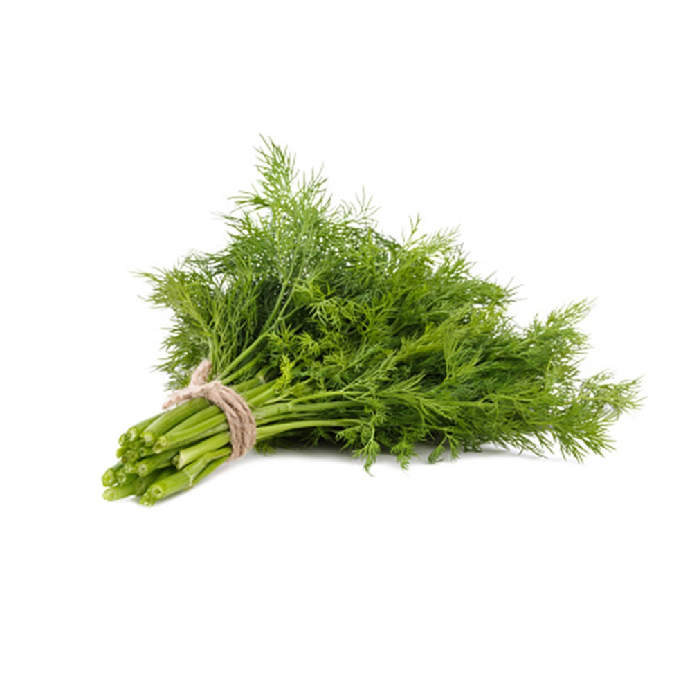 Fresh Fennel Leaves - in Sri Lanka
