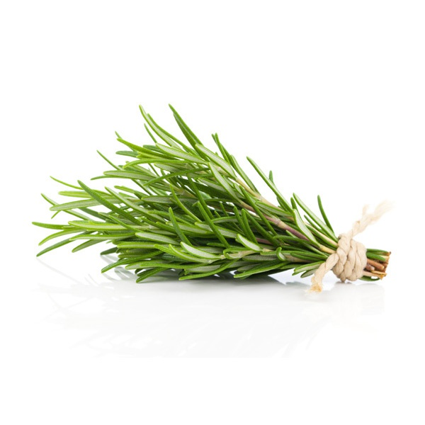 Fresh Rosemary - in Sri Lanka