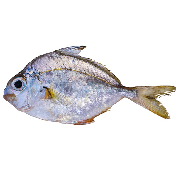 Karalla - GLOMARK - Fish - in Sri Lanka
