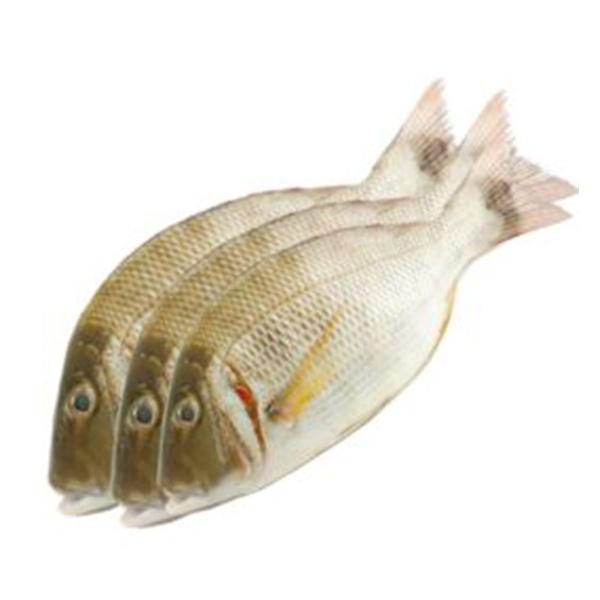 White Mullete - GLOMARK - Fish - in Sri Lanka